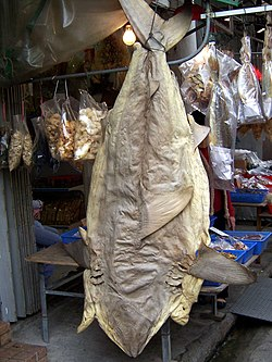 Photo of desiccated shark hanging on hook