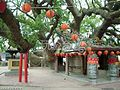 Taichung County, Houli Township, Yuemei Village, cloud Tau Road, Camphor tree - 1400 years old - panoramio (5).jpg