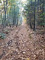Tantamous Hill fire lane in Nobscot Boy Scout Reservation adjacent to Nobscot Hill on Sudbury and Framingham Massachusetts MA USA border.jpg