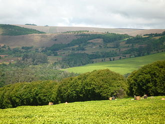 Njombe Region - Image: Tea plantations in Luewa District, Njombe Region, Tanzania
