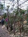 Teplice, skleník Tropicana, xerický skleník.jpg