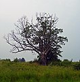 The Devil's Tree.jpg