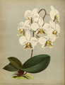 The Orchid Album-01-0119-0039.png