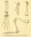 The Osteology of the Reptiles-210 dfgh ft.png
