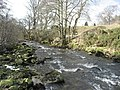 The River East Allen near The Holms - geograph.org.uk - 738945.jpg