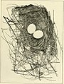 The bird; its form and function (1906) (14569041578).jpg