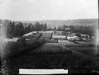 The garden and glasshouses at Hafodunos, Llangernyw
