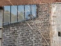 The spider's corner.jpg