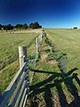 The straight fence - geograph.org.uk - 993637.jpg