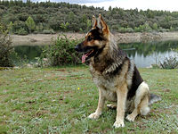 http://upload.wikimedia.org/wikipedia/commons/thumb/4/42/Thor_en_el_embalse_de_Puentes_Viejas.jpg/200px-Thor_en_el_embalse_de_Puentes_Viejas.jpg