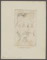 Thysanopus tricuspida - - Print - Iconographia Zoologica - Special Collections University of Amsterdam - UBAINV0274 097 12 0007.tif