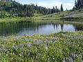 Tipsoo Lake (18958972384).jpg
