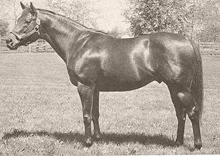 Tom Fool American Thoroughbred racehorse