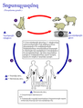 Toxoplasma gondii Life cycle PHIL 3421 lores hy.png