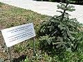 Tree Planted by French President Francois Hollande - Armenian Genocide Memorial and Museum - Yerevan - Armenia (18773012460).jpg