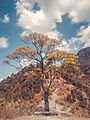 Tree with beautiful sky.jpg