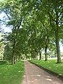 Treelined drive - geograph.org.uk - 560391.jpg