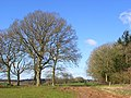 Trees in farmland, Chisbury - geograph.org.uk - 737853.jpg