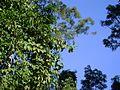 Trepadeiras, árvores e pássaro.jpg