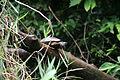 Turtle dive 1-2 (5682092662).jpg