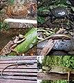 Turtles and lizards (10.3897-zookeys.757.24453) Figure 4.jpg