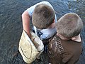 Two boys check the contents of their kick net (5029101197).jpg