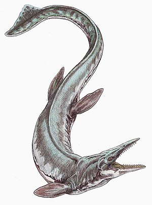 Matanuska Formation - Tylosaurus proriger may have scavenged the Matanuska hadrosaur's remains after it drifted out to sea.