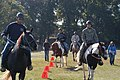 US Army 52806 Horse therapy gallops toward helpful transitions.jpg