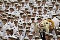 US Navy 030830-N-9693M-003 U.S. Naval Academy mascot.jpg