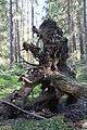 Uprooted tree 1, Vinterskogen.JPG