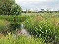 Urban Landscape - WWT London Wetland Centre - geograph.org.uk - 1444862.jpg