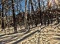 Valley Trail - Flickr - treegrow.jpg
