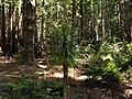 Van Damme, State Park - 3542878015.jpg