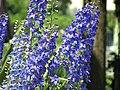 Vara in Gradina Botanica Cluj-Napoca (532293243).jpg