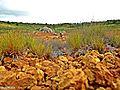 """Vegetação às margens originais da """"Lagoa da Pedra"""" - panoramio.jpg"""