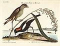 Verzameling van uitlandsche en zeldzaame vogelen (Tab. XXVIII) (7894164004).jpg