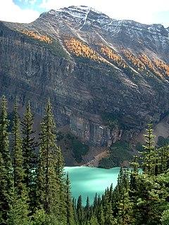 Alberta Mountain forests Temperate coniferous forest ecoregion in Alberta and British Columbia
