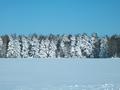 Vinter Håbo.png