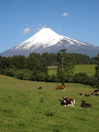 Natural regions of Chile - Cattle grazing near Llanquihue Lake. Osorno Volcano in the background.