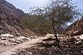 Wadi Gnai 2020-03-08-6.jpg