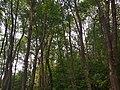 Wald im Wolfstalflur Tauberbischofsheim 03.jpg