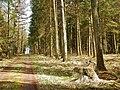 Waldweg - panoramio (46).jpg