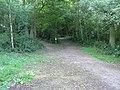 Wassell Wood - geograph.org.uk - 200945.jpg