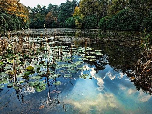 Water lilies in autumn.jpg