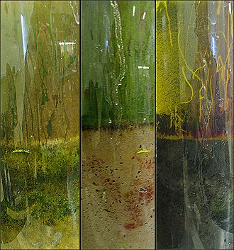 Winogradsky column -  Shown above as a result of a 7-week period where the columns have been allowed to grow algae, cyanobacteria and other bacterial colonies.  Of specific interest are the red regions of the middle column, indicative of purple non-sulfur bacteria (e.g. Rhodospirillaceae). Also, in column three, the red growth along the side of the column: a purple sulfur bacterium, Chromatium.