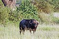 Western Serengeti 2012 06 02 4146 (7557734004).jpg