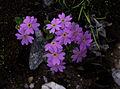 Whf purple 26.jpg