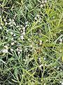 White flower image 2.jpg