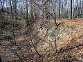 Widok do wnętrza kamieniołomu (- link do modelu 3D) - panoramio (2).jpg