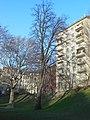 Wiener Naturdenkmal 620 - Sommerlinde (Döbling) a.JPG
